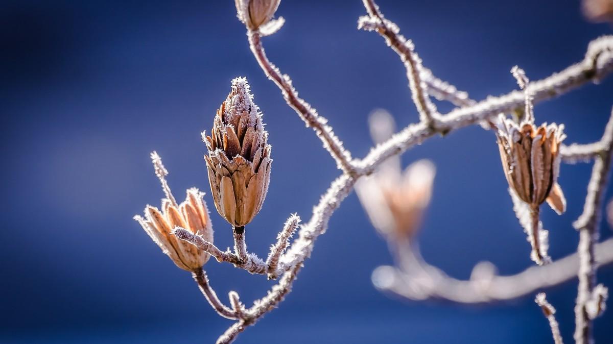 winter-598631_1920