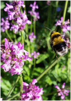 Helping to pollinate our flowers and crops