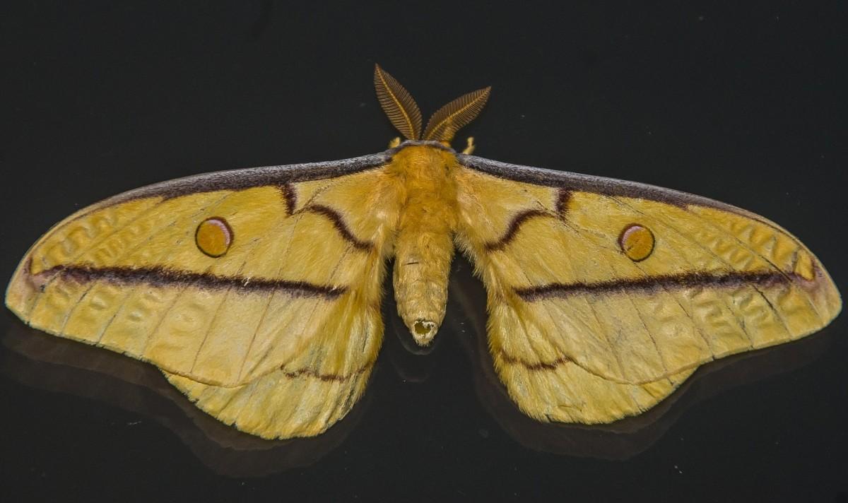 moth-1095763_1920
