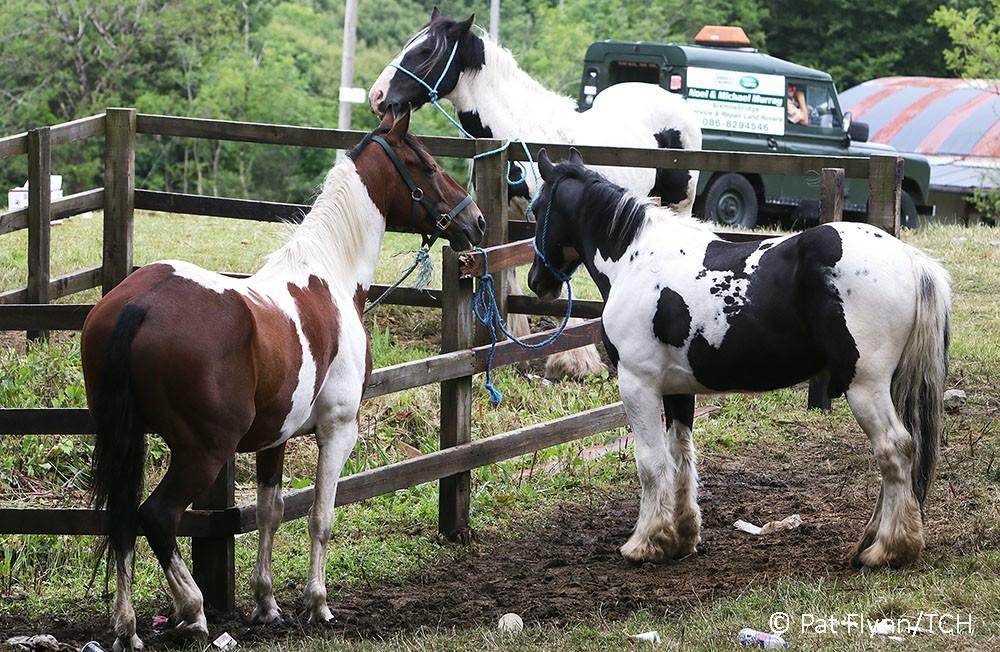 Horses Spancil Hill Fair